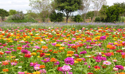 Fredericksburg - Where Texan Hospitality and German Traditions Thrive
