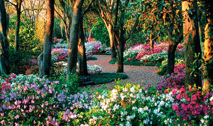 Experience Ever Changing Colors of Spring at Bok Tower Gardens