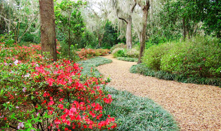 Spring is Peak Bloom Season at Bok Tower Gardens