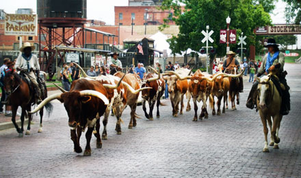 Delight in the Jingle of Spurs- Cattle Bawling and the Rhythm of Hoof Beats in Fort Worth Stockyards