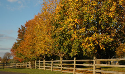 Picture of Trees in the Amish Countryside