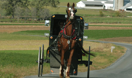 Discover the Rich History and Heritage of The Amish Country