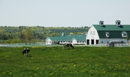 Picture of the Dairy Farm at Pineland Farms