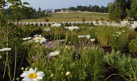 Picture of wildflowers at Pineland Farms
