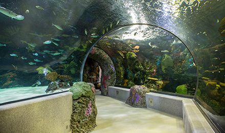 40-Foot Tunnel Through Red Seas Exhibit